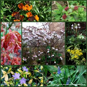 The-Garden-Photo-Challenge-to-prove-that-even-a-small-garden-can-be-interesting-all-year-Collage-of-photos-for-week
