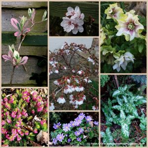 The-Garden-Photo-Challenge-to-prove-that-even-a-small-garden-can-be-interesting-all-year-Collage-of-photos-for-week-51