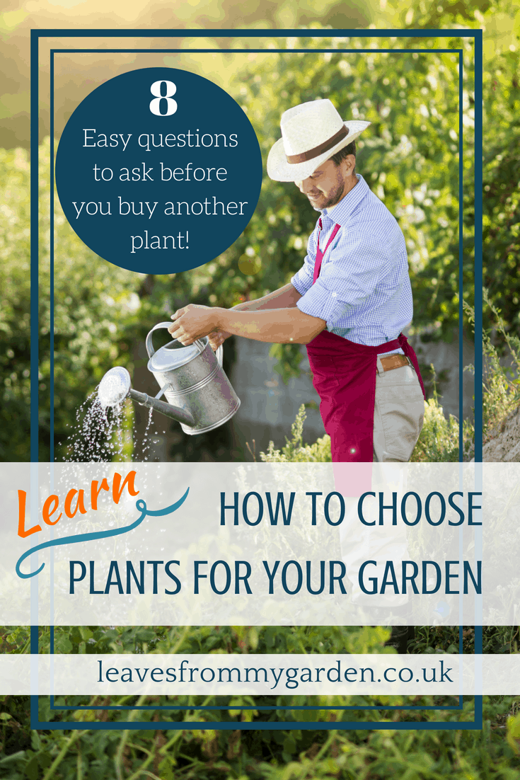 Learn how a Garden photo challenge can help you make informed plant choices and creating a better garden design. 8 Easy questions to ask before you buy another plant. Avoid disappoint and ailing plants, learn how to choose the right plants for your garden