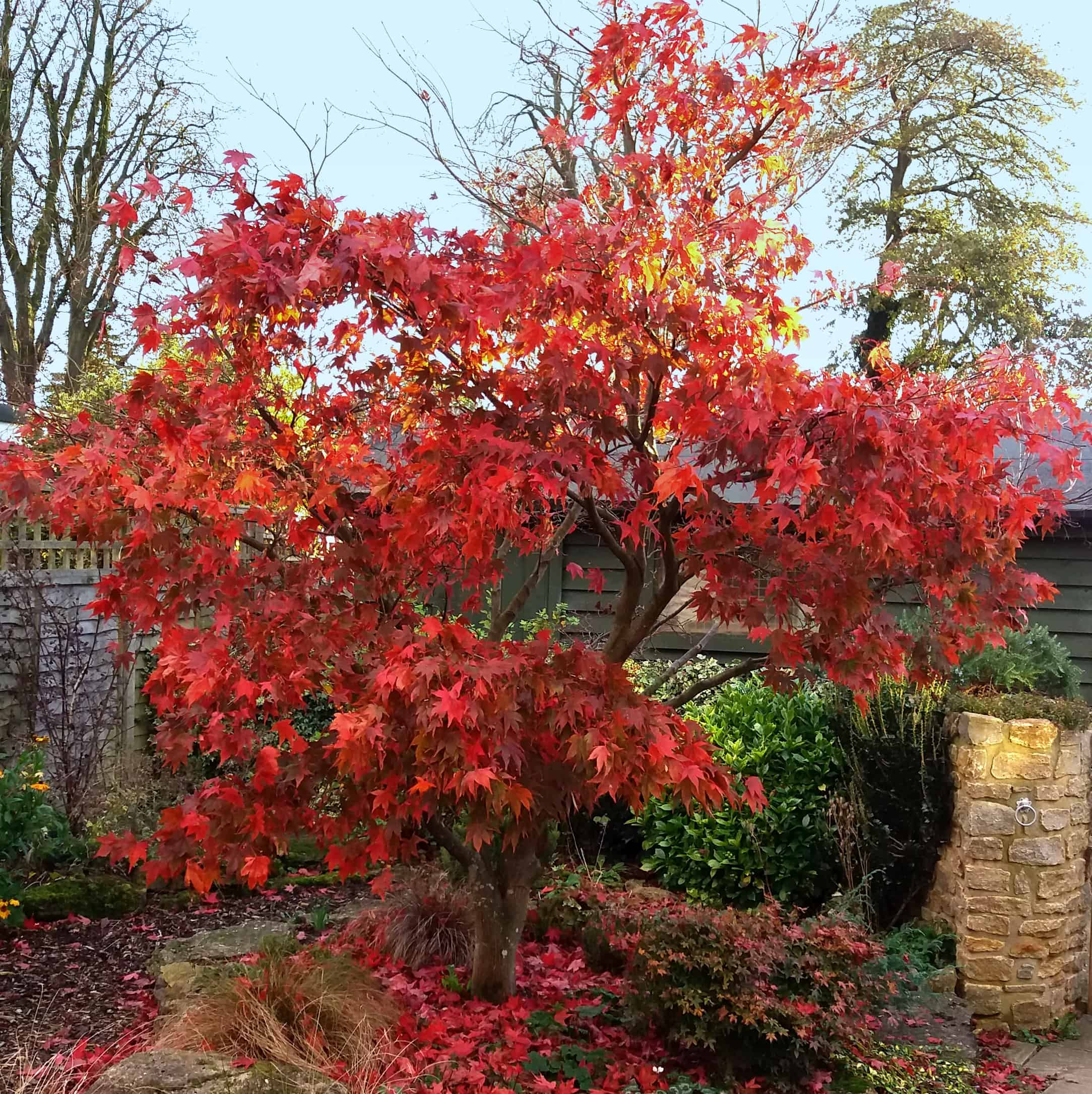 Tree-with-autumnal-colouring